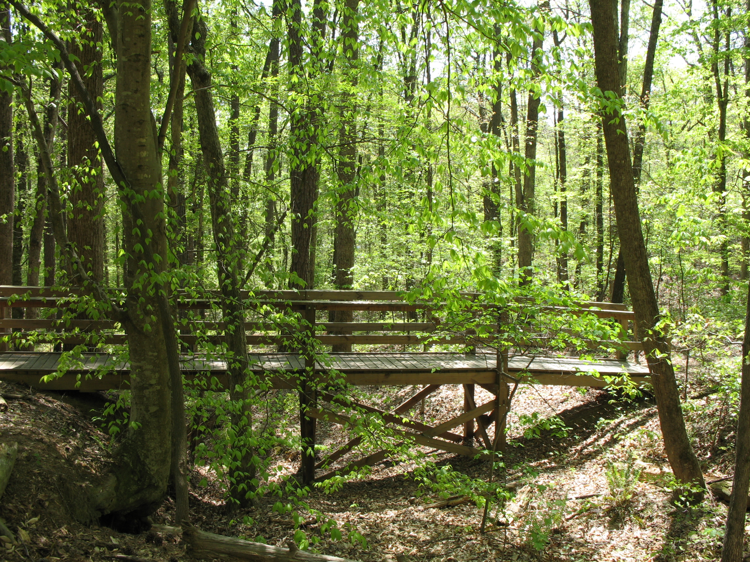Autrey mill trails autrey mill for Autrey mill